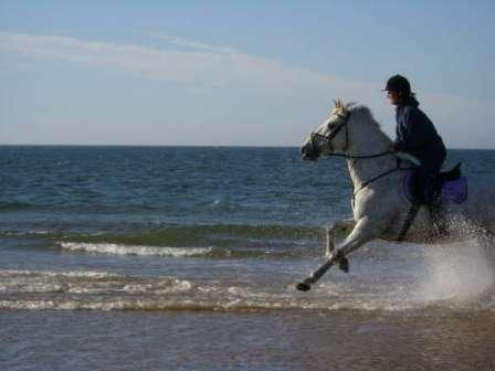 Redcar Racecourse: Riding Club Camp on the beach image